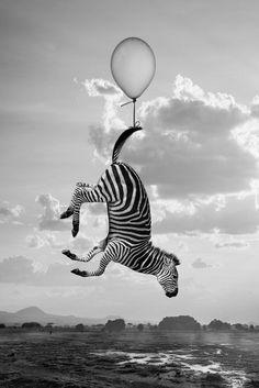 Hakuna Matata - The 'Hakuna Matata' series by french photographer Thomas Subtil captures animals at their most playful. Hakuna Matata takes animals nat. Hakuna Matata, Surrealism Photography, Animal Photography, Modern Photography, Zebras, Design Tropical, Friedrich Schiller, Photo D Art, Photocollage