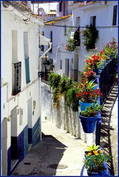 Picturesque, Spain Andalusia Torrox-Flores en las calles de Torrox Pueblo