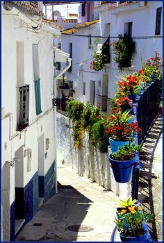 Picturesque, Spain Andalusia Torrox-Flores en las calles de Torrox Pueblo