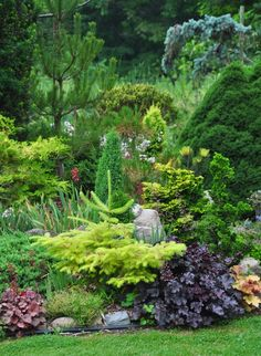 Awesome garden with conifers