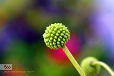 Colorful - Pinned by Mak Khalaf  Fine Art Buddybeautifulbudflowergreenmacronaturepinkred by fazeemi123
