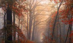 Naturaleza esplendorosa... Camino europeo con árboles, en otoño.