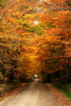 Country Road by BigD.  The name of the road is Bonin Road in the village of Orwell Hill, PA.