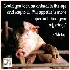 "Could You Look An Animal In The Eye And Say To It, ""My Appetite Is More Important Then Your Suffering?"" #GoVegan"