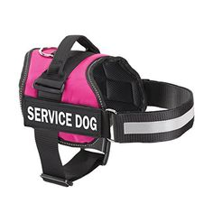 119 Best Service Dog Training Images On Pinterest Service Dog