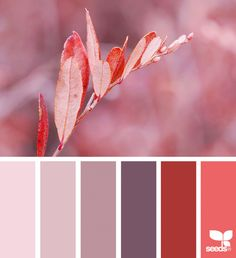 Autumn Color Palette With Mauves And Reds Graphicdesign Colorpalette Colorinspiration