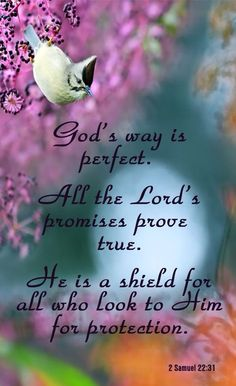 2 Samuel 22:31 (KJV) ~  As for God, his way is perfect; the word of the Lord is tried: he is a buckler to all them that trust in him.