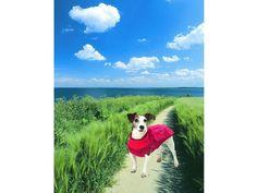 Hundepullover Hundestrickpullover Wärmepullover mit Regencape rot schwarz