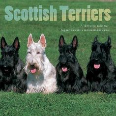 Scottish Terriers Wall Calendar: This 2013 wall calendar features a dozen beautiful Scottish Terriers. Many people love them, including the 43rd President, George W. Bush. This calendar is the perfect gift for any Scottie lover!  http://www.calendars.com/Scottish-Terriers/Scottish-Terriers-2013-Wall-Calendar/prod201300001867/?categoryId=cat10117=cat10117#