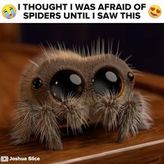 This Spider Is So Cute I'm Actually Crying A Little