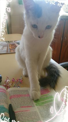 Angel and the Bible again! :D hahaa Cute Little Things, Call Her, Bible Scriptures, Holy Spirit, Peace And Love, Told You So, Angel, Christian, Animals