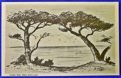 USA - CALIFORNIA - PEBBLE BEACH, CYPRESS TREES, LD WHIFFIN  Linen (c. 1930-1945)