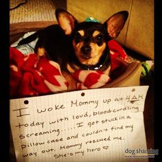 I usually don't like dog shaming, but this is too cute.