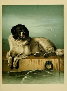 Great Pyrenees Mountain dog, by Landseer