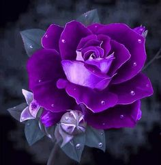 Purple....Violet....Delicate