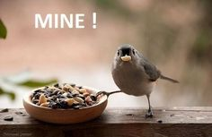 Selfish bird is selfish.