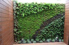 Resultado de imagen para plantas muro verde