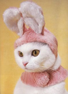 Siamese Cats Pet Costumes For Cats - This superman Pet costume is as much fun as it is adorable. Support your superhero pet with a superhero costume. Catsu The Cat, Easter Cats, Easter Bunny, Happy Easter, Funny Animals, Cute Animals, Animals Images, Baby Animals, Chesire Cat
