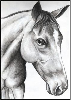 Charcoal Drawing of Your Pet 8x10 by WhisperSweetThings on Etsy