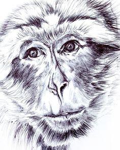 Monkey in Marrakech by Hannah Harding