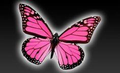 ~Pink