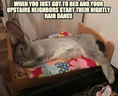 Don't you hate when this happens? #rabbit #bunny #bunnies #cuteanimals #pet