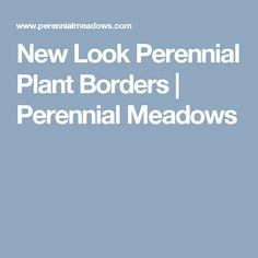 New Look Perennial Plant Borders   Perennial Meadows