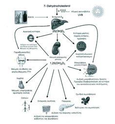 Εναλλακτικές προτάσεις Υγείας ,Διατροφής,Ψυχολογίας και θεραπευτικά βότανα