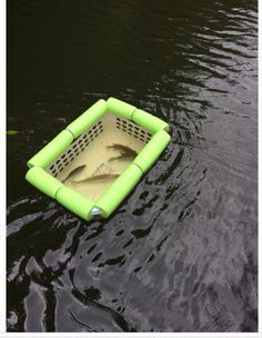 laundry basket, pool noodle....instant fish basket!  Great for kayak fishing!
