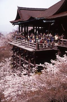 Kiyomizu Temple, Kyoto, Japan. It's over 1,000 years old and still standing!!