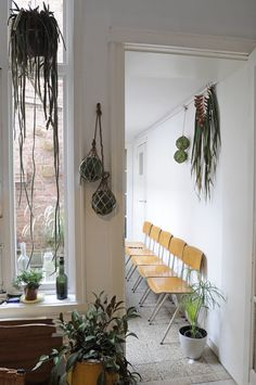Hanging plants, plants in interior design - indoor/outdoor room via Atelier Solarshop - Monday's Pretty Things on Oaxacaborn Inspiration Design, Interior Inspiration, Indoor Garden, Indoor Plants, Indoor Outdoor, Outdoor Living, Image Deco, A Well Traveled Woman, House Inside