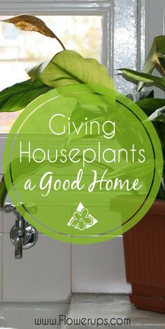 Assessing your house for indoor garden, houseplants. What conditions are in your home for the best results with hanging plants, house plants, etc.