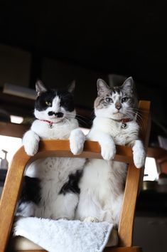 Animals For Kids, Animals And Pets, Cute Animals, Beautiful Cats, Cool Cats, Funny Cats, Kawaii, Pictures, Kitty