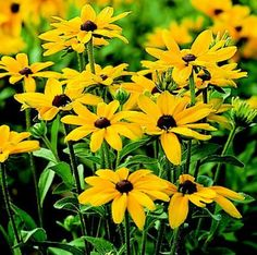 List of hardy midwest perennials surely i could keep some of these 12 top midwest perennial flowers mightylinksfo