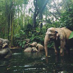 Disney-Jungle Cruise.