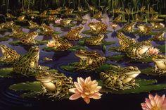 Braldt Bralds: Frogs