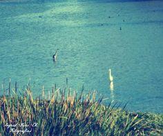 Estero Marga Marga, Viña del Mar
