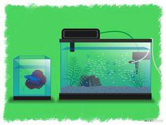 How to Breed Betta Fish Fish Tank For Kids, Breeding Betta Fish, Aquarium Fish, Fish Aquariums, Betta Tank, Beta Fish, Siamese Fighting Fish, Going Fishing, Freshwater Fish
