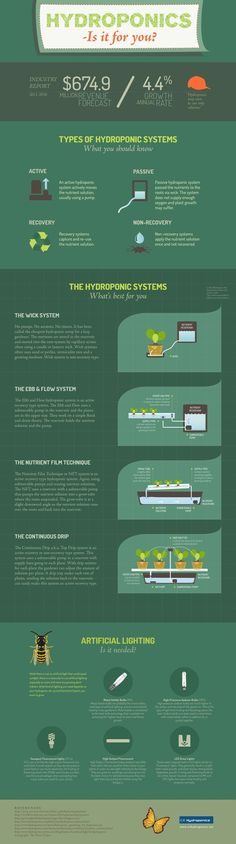 Hydroponics Infographic - Is it for you? http://hubpages.com/living/All-You-Need-To-Know-About-Hydroponics: