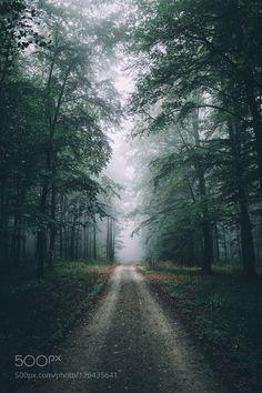 500px Editors Choice : Moody forest walk. by Bokehm0n