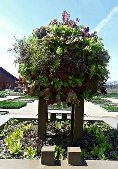 Check out the salad bowl growing in the Heartland Harvest Garden! by Powell Gardens, Kansas Citys botanical garden, via Flickr