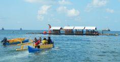 Hasil gambar untuk bangsring underwater Underwater, Tours, Under The Water