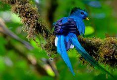 Matéria Incógnita – Inovação e Criatividade » 600 espécies de aves tropicais em risco por aquecimento global