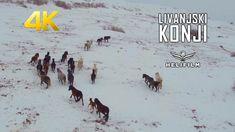 Livanjski divlji konji  - Snimci iz zraka - Wild Horses - Amazing Drone ...