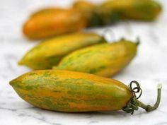 Papaya Carica Papaya Obst Riese sehr lecker 200 Saatgut frisch