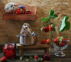 strawberry jam - http://www.calendars.com/Small-Pets/Hedgehogs-2016-Wall-Calendar/prod201600004575/?categoryId=cat00343&seoCatId=cat00343