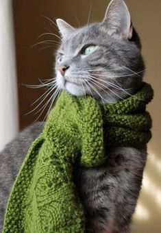 .2 seconds after this was taken that cat ripped its owner's face off for putting it in a scarf <<---------omg this.