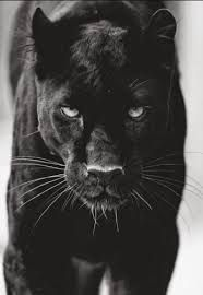Image result for realistic panther tattoo