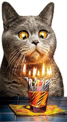 Happy birthday more. happy birthday more cat birthday wishes, happy birthday funny