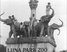 1920s : Cleaning the elephants at Luna Park Zoo